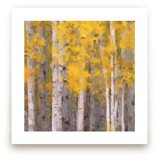 Fall Birches by Amy Hall