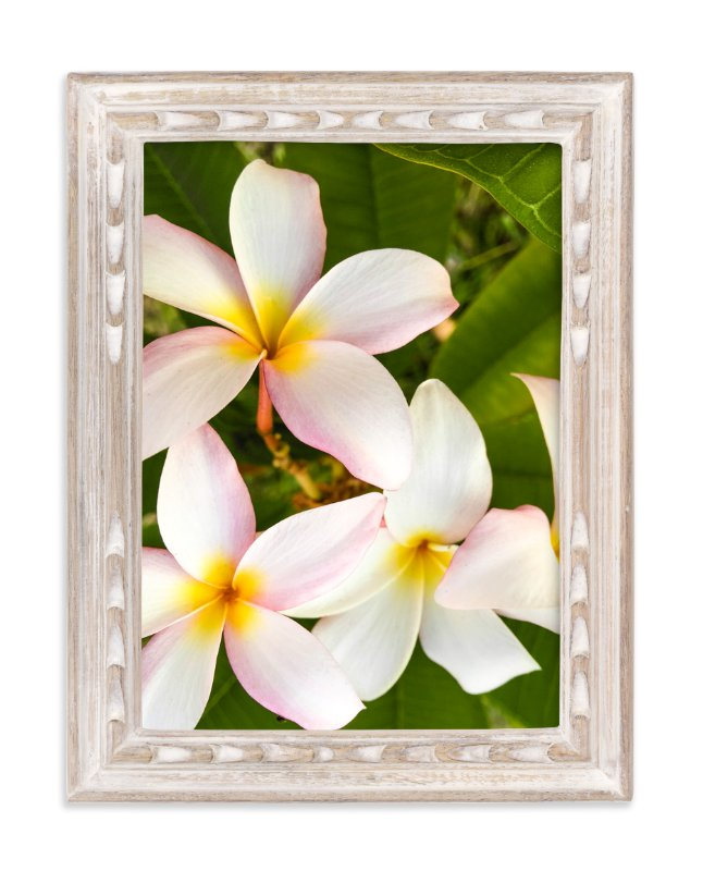 """From My Garden"" - Art Print by Mely D Lozano in beautiful frame options and a variety of sizes."