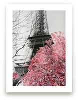 Paris in Bloom by Katrina Leandro