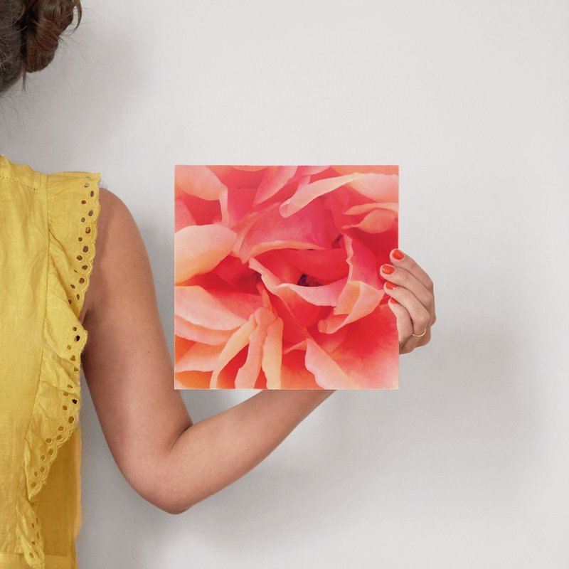 Sherbet Rose 2 Wall Art Prints By Niki Digrigorio Minted