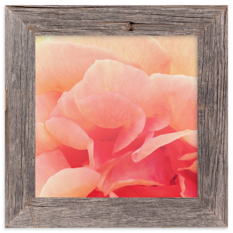 """""""sherbet rose 3"""" - Art Print by Niki Digrigorio in beautiful frame options and a variety of sizes."""