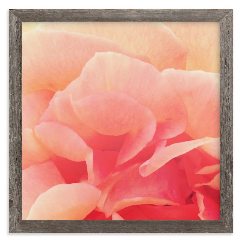 """sherbet rose 3"" - Art Print by Niki Digrigorio in beautiful frame options and a variety of sizes."
