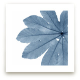 Leaf in Blue by Jonathan Brooks