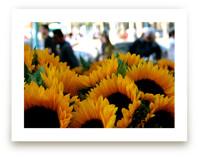 Sunflower Market by AJD