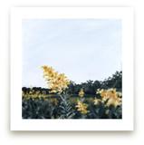 Goldenrod Field by Emma Ballou