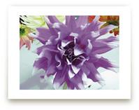 Watercolor Dahlia by Mazing Designs