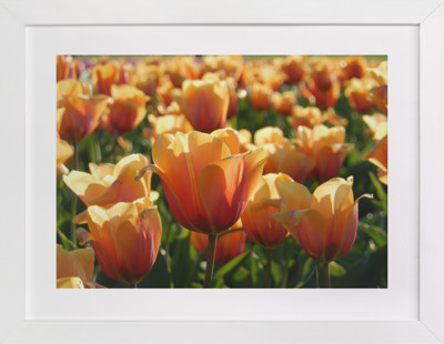 Sunshine Tulips  Art Print