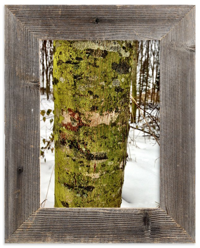 """""""Winter Green"""" - Art Print by Misty Hughes in beautiful frame options and a variety of sizes."""