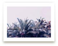 Palmistry by ALICIA BOCK