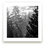 Morning Fog by Jan Kessel