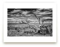 A Harsh Land by Brendan T Kelly