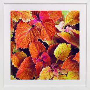 Fall's Blush  Art Print