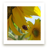 Lady Bug on a Sunflower... by Skoodler Designs