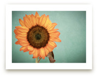 Sunflower Power by Debra Butler