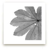 Leaf in Black & White by Jonathan Brooks