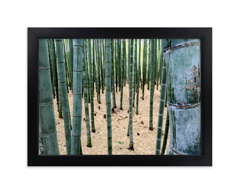 """""""Bamboo Garden"""" - Art Print by nathan glynn in beautiful frame options and a variety of sizes."""