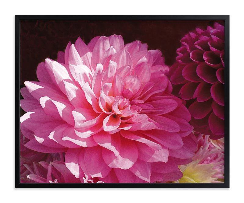 """""""Pink Dahlia"""" - Art Print by A Maz Designs in beautiful frame options and a variety of sizes."""