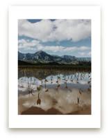 Taro Fields by Christian Florin