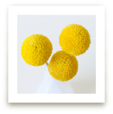 Billy Buttons Wall Art Prints