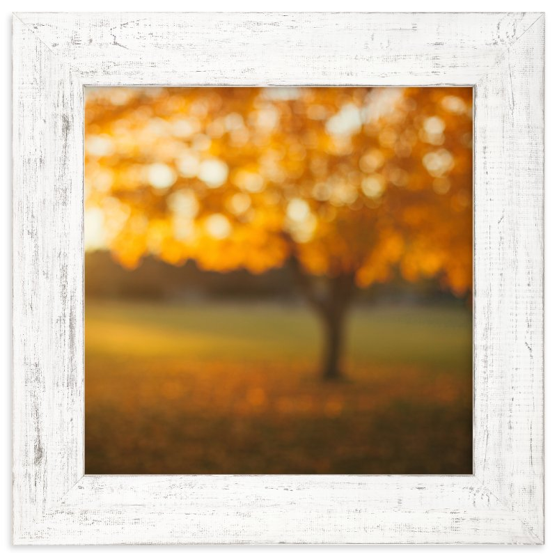 """""""Oak Knoll Gold"""" - Art Print by Stacy Kron in beautiful frame options and a variety of sizes."""