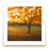 Oak Knoll Gold by Stacy Kron