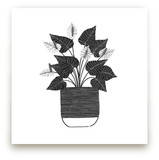 A Simple Anthurium by Madeline Trait
