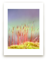 Sporophyte Wall Art Prints