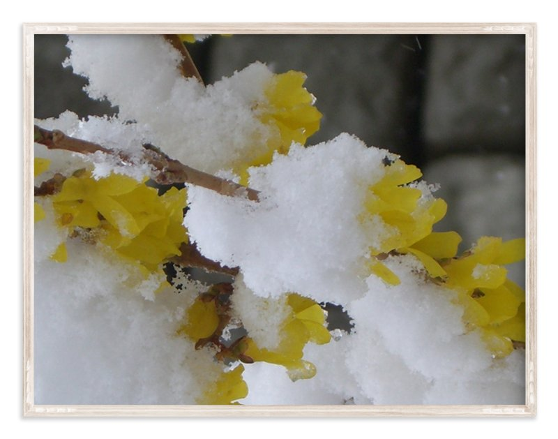 """""""Snow Flower"""" - Art Print by Jan Kessel in beautiful frame options and a variety of sizes."""