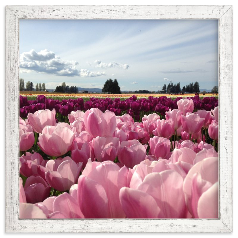 """Pink Fields of Light"" - Art Print by Jan Kessel in beautiful frame options and a variety of sizes."