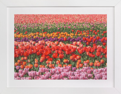 Tulip Power  Art Print