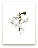 kelp print 003 by aeryn donnelly design