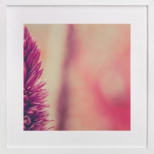 Fuchsia Study 4  Art Print