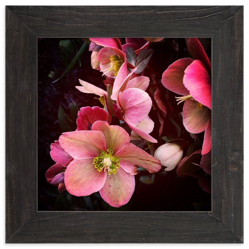 """Spring Noir 3"" - Art Print by Sarah Johnson in beautiful frame options and a variety of sizes."