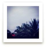 Palm Tree Dusk