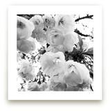 Spring Noir 5 by Sarah Johnson