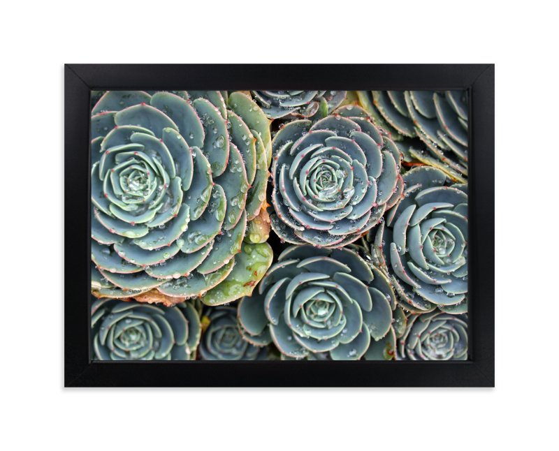 """""""Raindrops on Succulents"""" - Art Print by Becky Nimoy in beautiful frame options and a variety of sizes."""