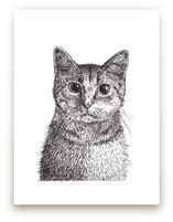 Kitten by XL