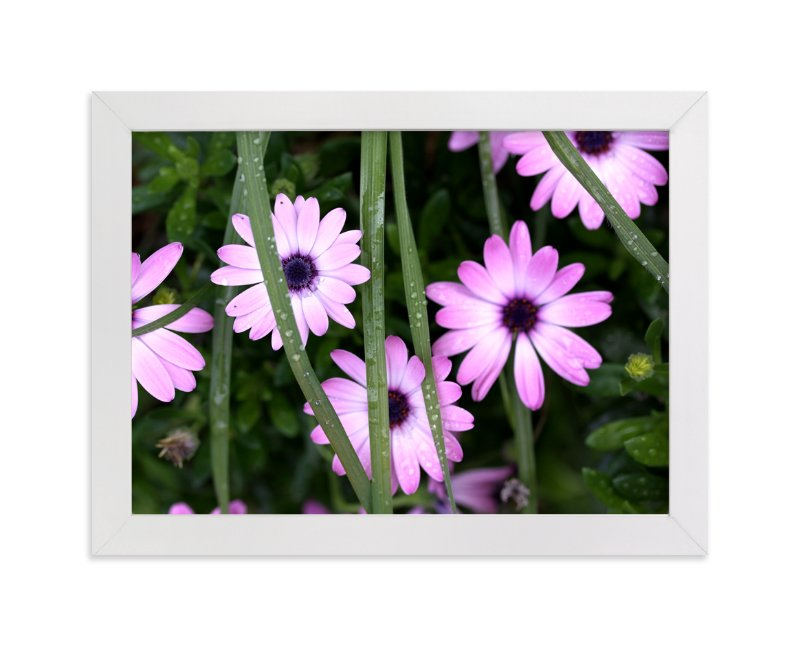 """Dew Drops on Purple African Daisies"" - Art Print by Becky Nimoy in beautiful frame options and a variety of sizes."