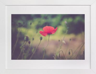 Red Poppy Flower  Art Print