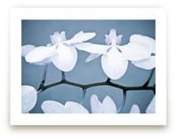 Orchid Wings by Debra Butler