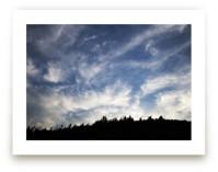 Of Trees and Sky by Carol Schiraldi