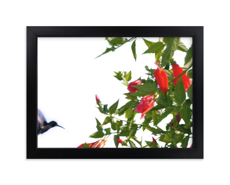 """A hummingbird in action"" - Art Print by Celia Maria in beautiful frame options and a variety of sizes."