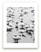 Migratory Birds Part 2 by Hello Sophie Design Lab
