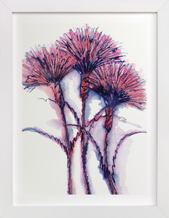 Wild Carnations  Art Print