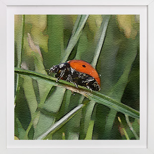 Lady Bug Two  Art Print