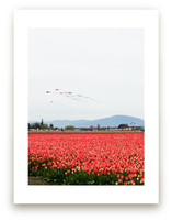 Kites in a Tulip Field by Sara Curtis