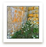 Orange Textured Wall by Andy Mars