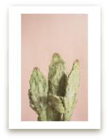 Blushing Cactus