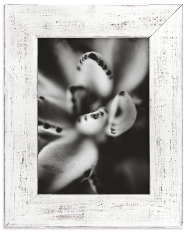 """Succulent Study #1"" - Art Print by Stacy Kron in beautiful frame options and a variety of sizes."
