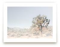 Joshua Tree #1 by Shannon Howard